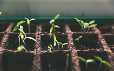 seedlings to represent business growth checklists