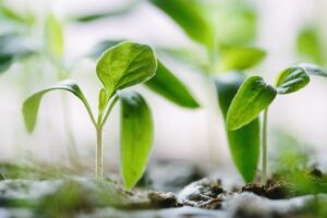 seedlings to represent small firms and what is involved in their partnership admission process