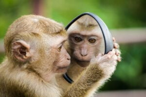 a monkey looking at himself in the mirror to represent seeing yourself as a client