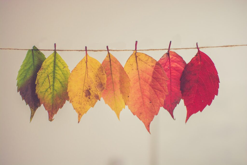 leaves changing colour to represent what changes when you make partner